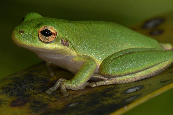 Treefrog Feature
